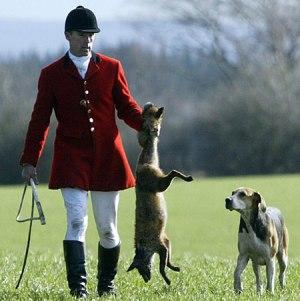fox-hunting-2