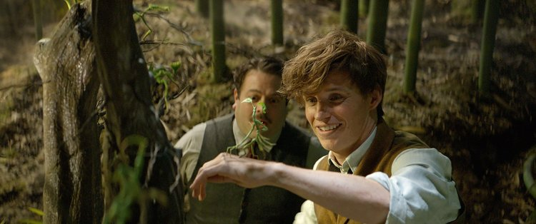 bowtruckle-newt-fantastic-beasts