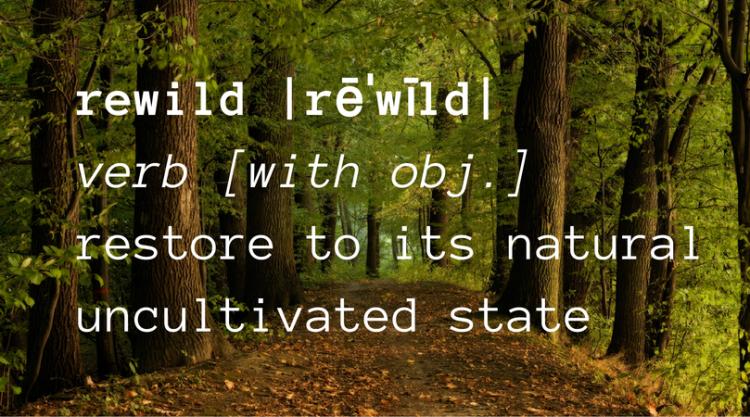 rewildingdefo