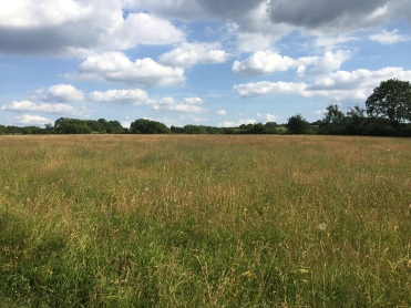 Before: A rich meadow in early July...